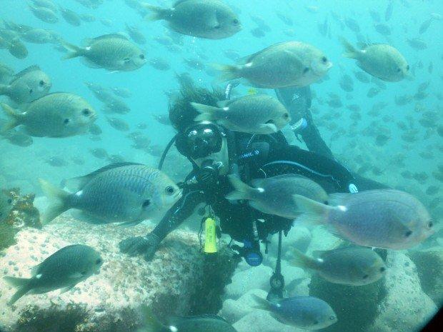 """SS Kelloe Scuba Diving"""