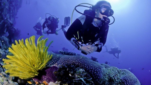 """""""Scuba Divers at 4th-5th Reefs"""""""