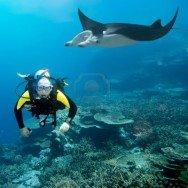 Manta Reef, Tofo Beach