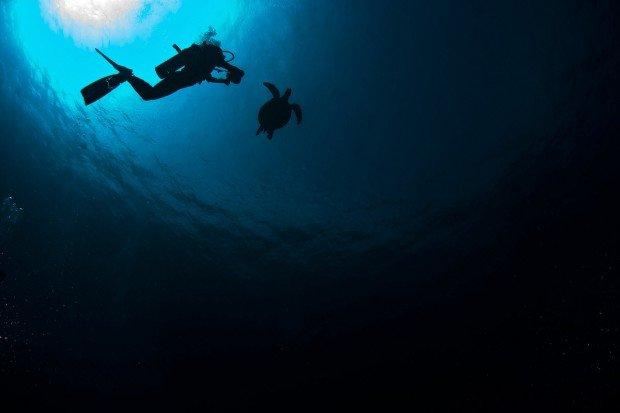 """Shark Point Scuba Diver"""