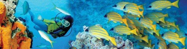"""Shiprock Scuba Diving"""