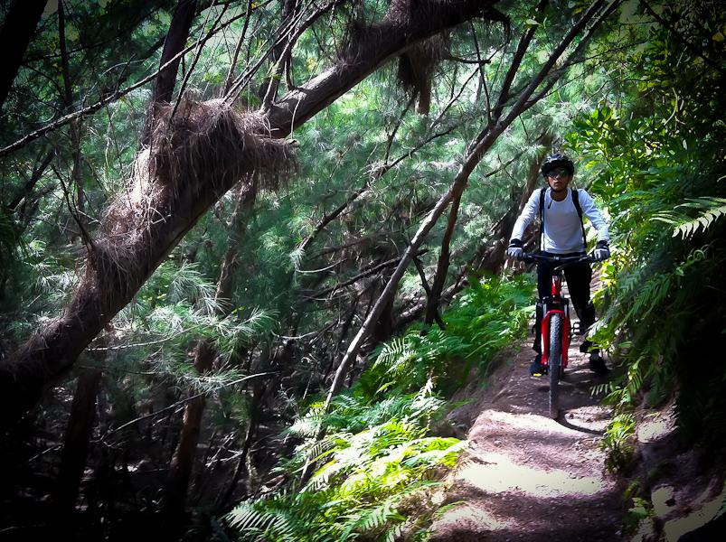 Mountain Biking Oleta River State Park Miami Florida Usa
