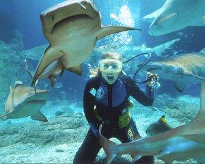 """Shark Diving at Mooloolaba Queensland"""