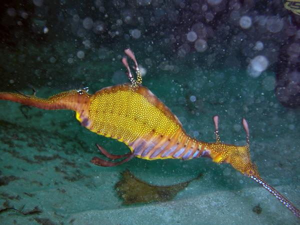 """Scuba Diving at Bell Park Western Australia"""
