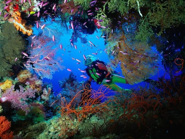 """""""Scuba diving at Pillars of Hercules Antigua"""""""