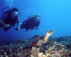 Shoal Bay Reef, Anguilla
