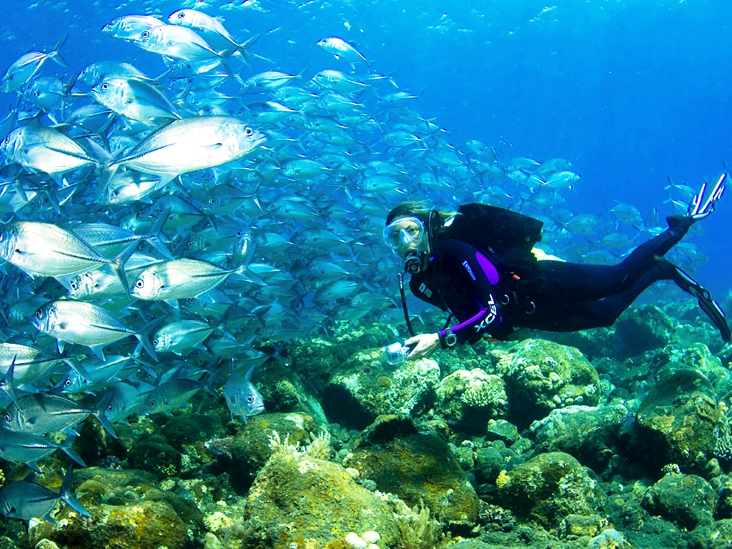 Scuba diving tenneco towers miami florida usa for Fishing spots in miami