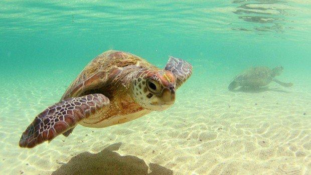 """Snorkeling at Old Woman Island"""