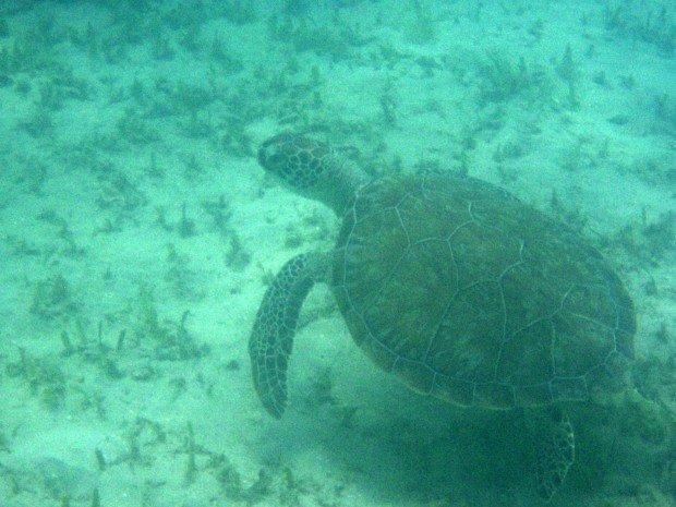"""""""Snorkeling at Pillars of Hercules Antigua"""""""