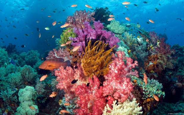 """Scuba diving at Cape Kri"""