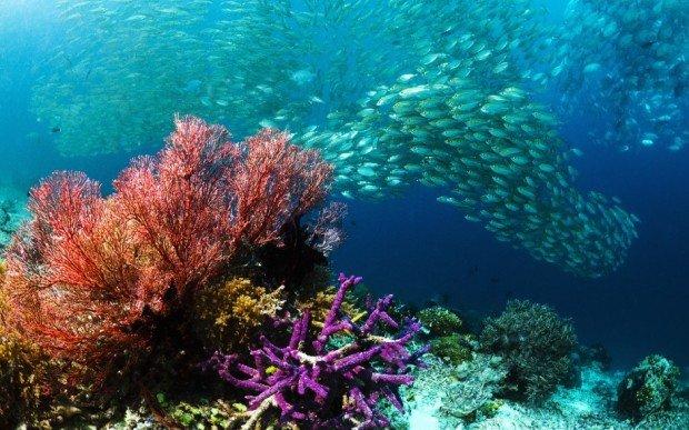 """Scuba diving at Sardine Reef"""