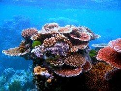 Sardine Reef, Raja Ampat Islands