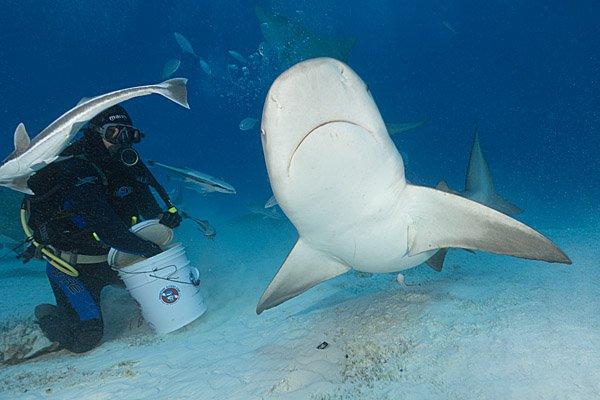 """""""Shark diving at Bull Shark Spot"""""""
