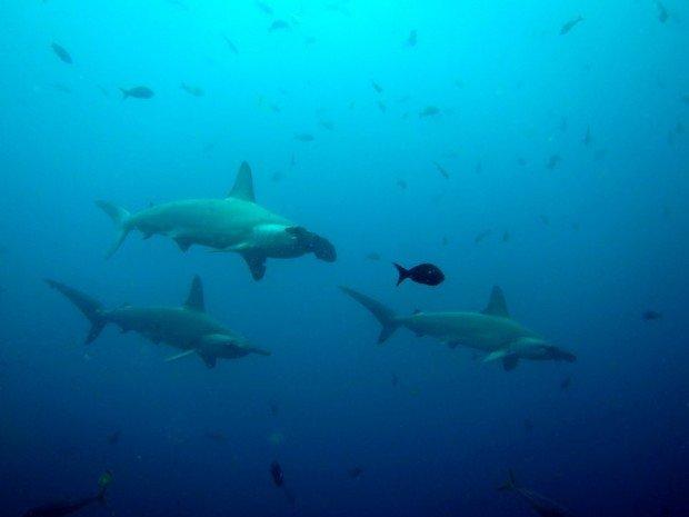 """Asmarqa Point Scuba Diving"""