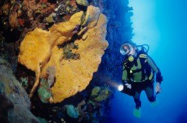 Tent Reef Wall, Saba