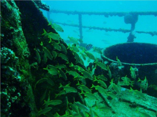 """Scuba Diving at Antilla Wreck"""