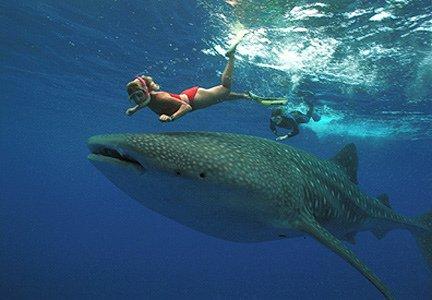 """Scuba Diving in Chole Bay"""