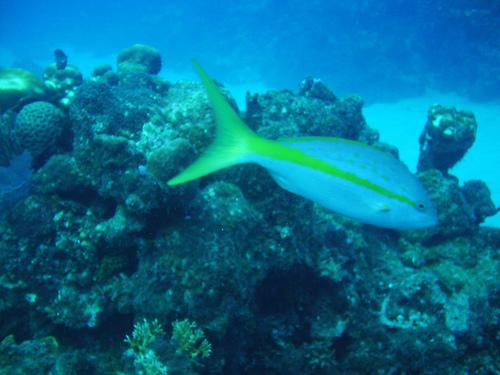 Scuba Diving Devil's Reef Ocho Rios Jamaica