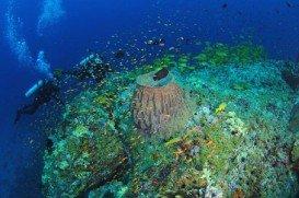Dixon's Pinnacle, Andaman & Nicobar Islands