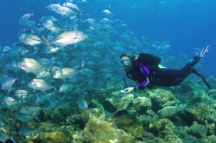 Scuba Diving Lipah Bay Amed Bali Indonesia
