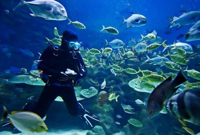 """""""Scuba Diving in Lipah Bay"""""""