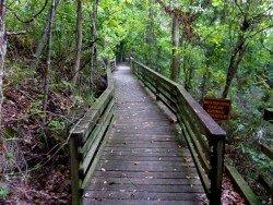 LeFleur's Bluff State Park, Jackson