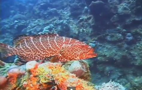 ''Scuba Diving at Aquarium''