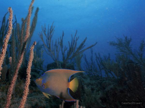 ''Snorkeling at Playa Esmeralda''