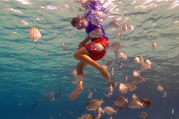 Scuba Diving Coki Beach Saint Thomas US Virgin Islands