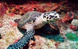 Kariwak Reef, Tobago