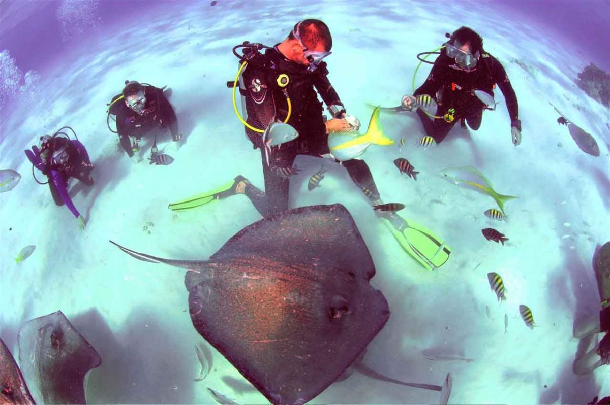 Snorkeling Stingray City Grand Cayman Cayman Islands