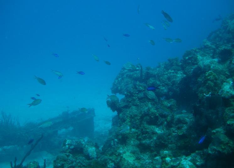 Scuba Diving and PADI Dive Training