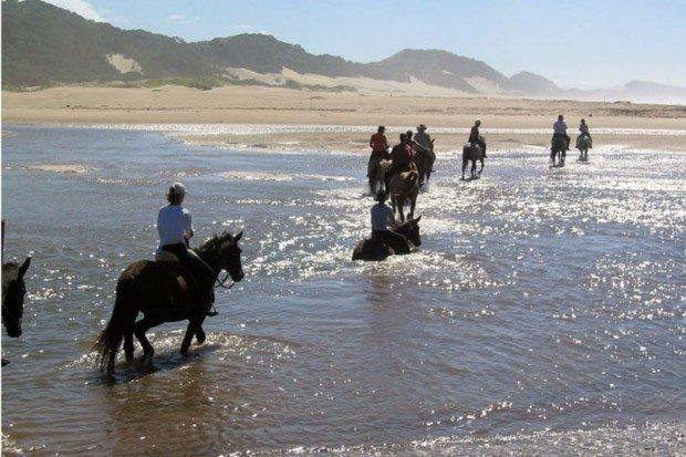 """Horseback Riding at Cher-a-Don Mkulu Kei Horse Trail"""