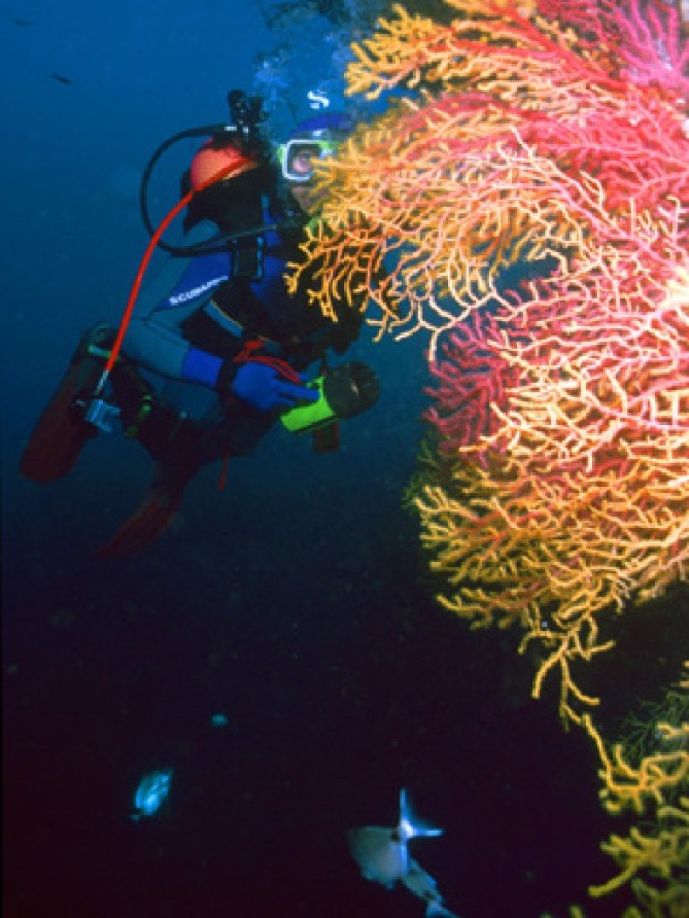 """Scuba Diving at Carall Bernat"""