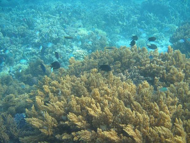 ''Scuba Diving in Agni, Corfu Island''