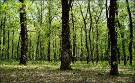 Folois Forest, Hleia