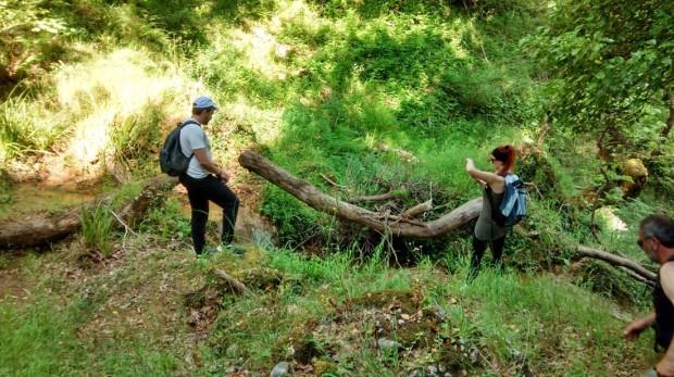 ''Trekking in Folois Forest, Hleia''