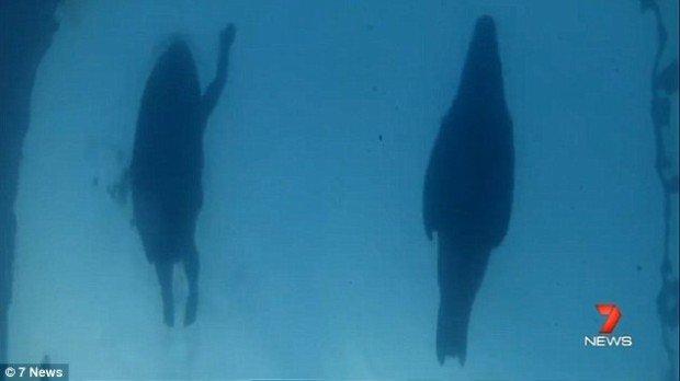 """shark tales"""