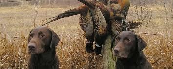 Hunting in Macedonia 5