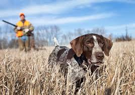 Hunting in Macedonia 7
