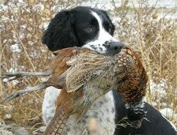 Hunting in Macedonia 8