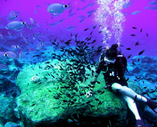 """Sunfish Divers 25"""