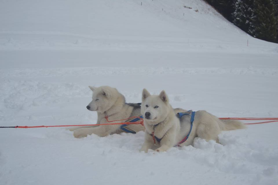 Dog sledding 2
